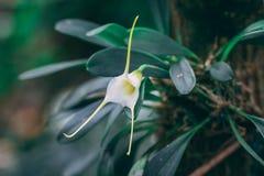 Växt för vit blomma med vita kronblad arkivfoton