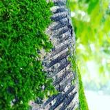 Växt Grillmarks royaltyfri fotografi