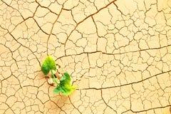 Växt i öknen Arkivbild