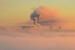 Växt i en dimma Arkivbilder