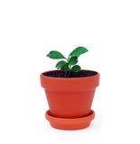 Växt i en kruka Royaltyfri Bild