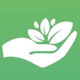 Växt i ett handtecken av miljöskydd, rengöringsduksymbol Vect Royaltyfri Bild