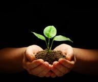 Växt i händer arkivfoton