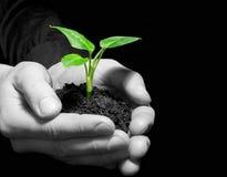 Växt i händer Arkivbild