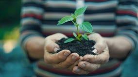 Växt i händer för kvinna` ett s stock video