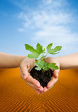 Växt i händer i öken Arkivfoton
