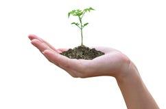 Växt i handen Arkivbilder