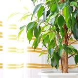 Växt i husslutet upp royaltyfri foto