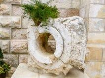 Växt i kruka på stenfragmentet, Notre Dame de Jerusalem Fotografering för Bildbyråer