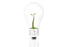 Växt i lampan Royaltyfria Foton