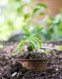 Växt i rostiga cans på jordning arkivfoto