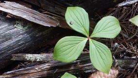 Växt i skogen Arkivbilder