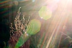 Växt i solljusstråle Arkivfoto