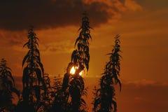 Växt i solnedgångljus Arkivfoton