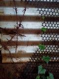 Växt i tenn- staket Royaltyfria Foton
