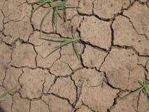 Växt i torkad sprucken mud arkivfoto