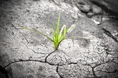 Växt i torkad sprucken mud. Ny livstid. royaltyfria foton
