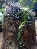 Växt i trä Arkivbild