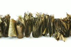 växt- indisk tea arkivbild