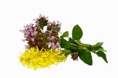 växt- isolerad white för bakgrund Fotografering för Bildbyråer