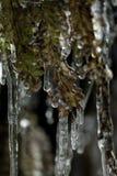 Växt med is Arkivfoto