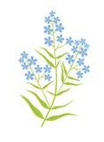 Växt med blåttblomman Royaltyfri Fotografi