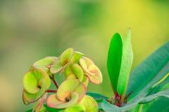 Växt med blommor Arkivfoto