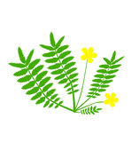 Växt med den gula blomman Royaltyfria Bilder