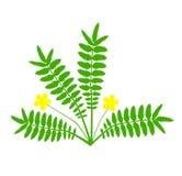 Växt med den gula blomman Arkivfoton