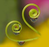 Växt med droppar Arkivfoto