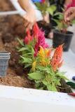 Växt med färgrikt Royaltyfri Foto
