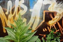 Växt med graffity Royaltyfri Bild