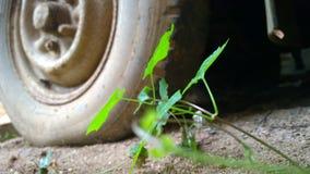 Växt med hjulet Royaltyfri Foto