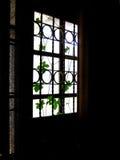 Växt med ljus och mörker Royaltyfri Foto