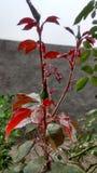 Växt med mest härlig naturliga färger Fotografering för Bildbyråer