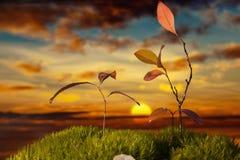 Växt med röda blad på mossa på solnedgången Arkivbild