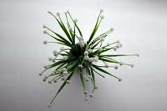 Växt med vita blommor som ses från över Royaltyfri Bild
