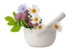 växt- medicin royaltyfria bilder