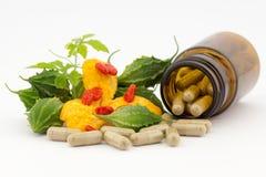 Växt- medicin Royaltyfri Foto