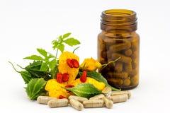 Växt- medicin Royaltyfri Fotografi