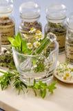 Växt- medicin. Royaltyfri Foto