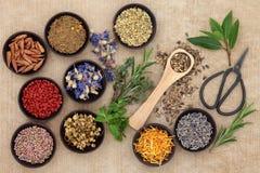 Växt- medicin Arkivfoton