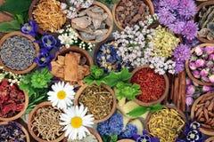 Växt- medicin med örter och blommor Royaltyfri Fotografi