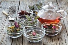 Växt- medicin, phytotherapy medicinska örter arkivfoton