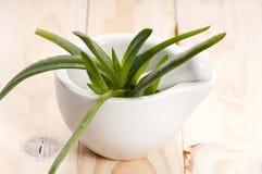 växt- medicin vera för aloe Royaltyfria Bilder