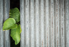 Växt mellan trägolvet Royaltyfria Bilder