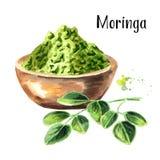Växt- Moringa lämnar med pulver Superfood Dragen illustration för vattenfärg som hand isoleras på vit bakgrund arkivbild