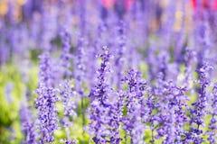 Växt och blomma Fotografering för Bildbyråer