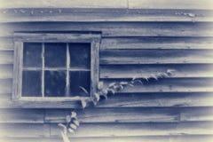 Växt och fönster Arkivbilder