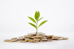 Växt och mynt arkivfoto
